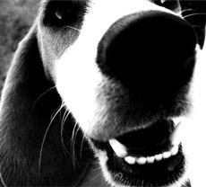 Got a barking dog problem?