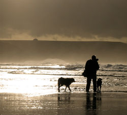 Walking dogs on the beach
