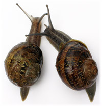 Escargots, the French and their food...