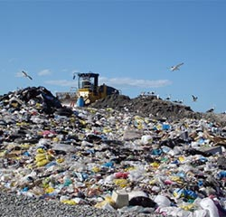 Carrier bags in a landfill site