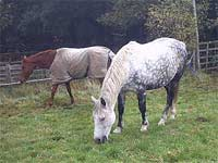 Horse picture: Horses in a field