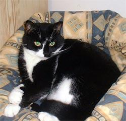 Mogsi, cat in a basket