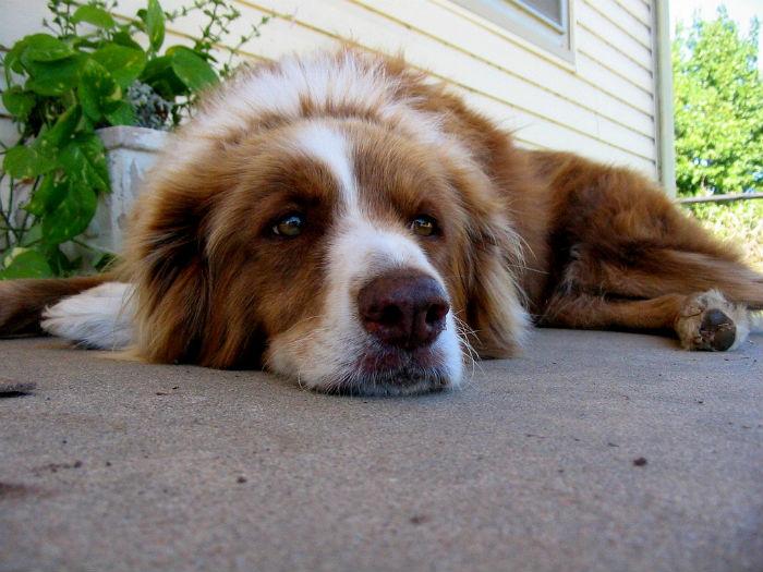 Barking dog next door