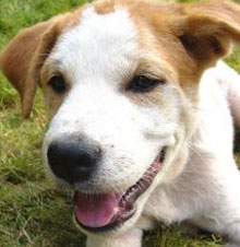 Barking puppy nuisance