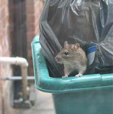 Rats in the rubbish, Where does your Council Tax go?