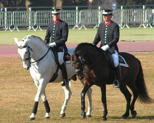 Horse Picture: Barcelona, spanish mounted police