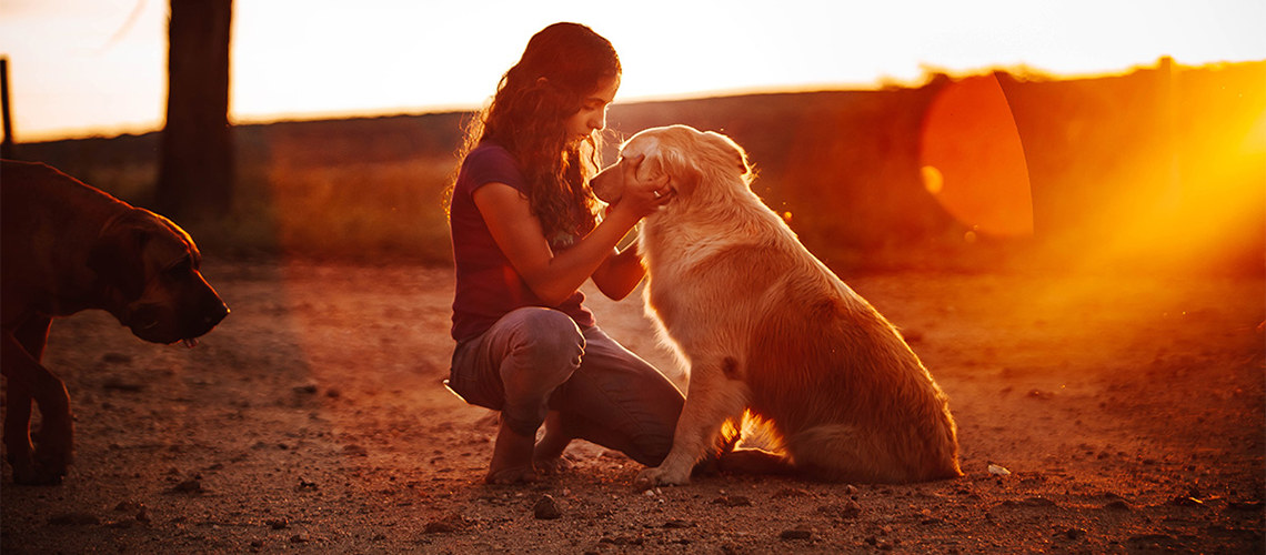 website not for profit charity image girl with dog - The Animals Melbourne Blog Image