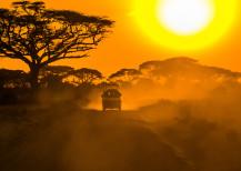 Dreaming of an African Safari?