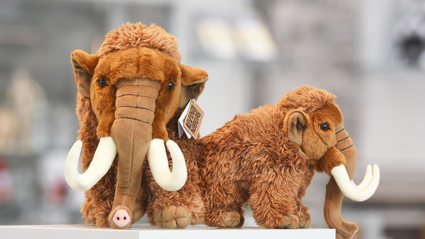 Toy mammoths in the shop at The Box