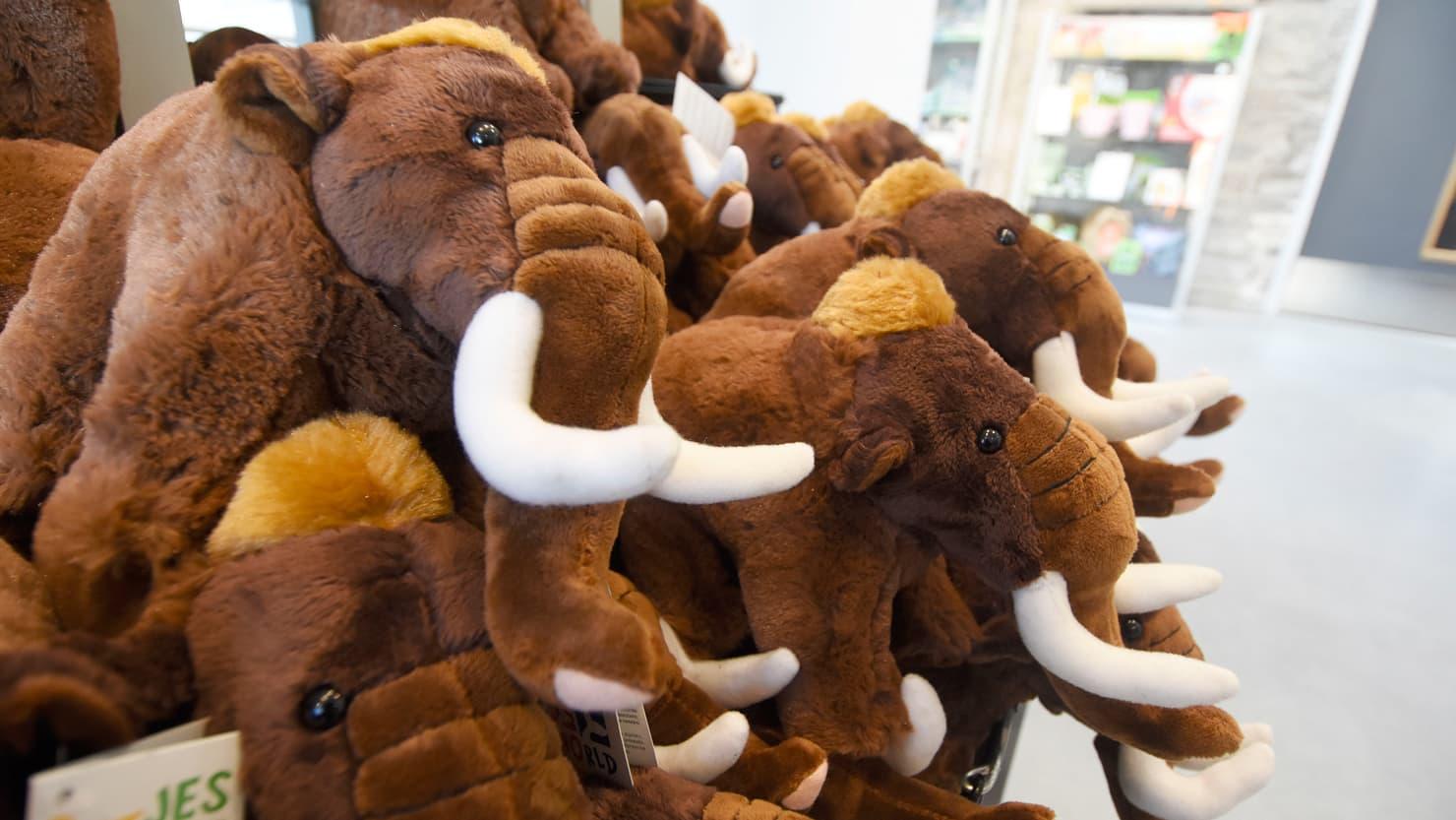 Cuddly mammoth toys in a shop