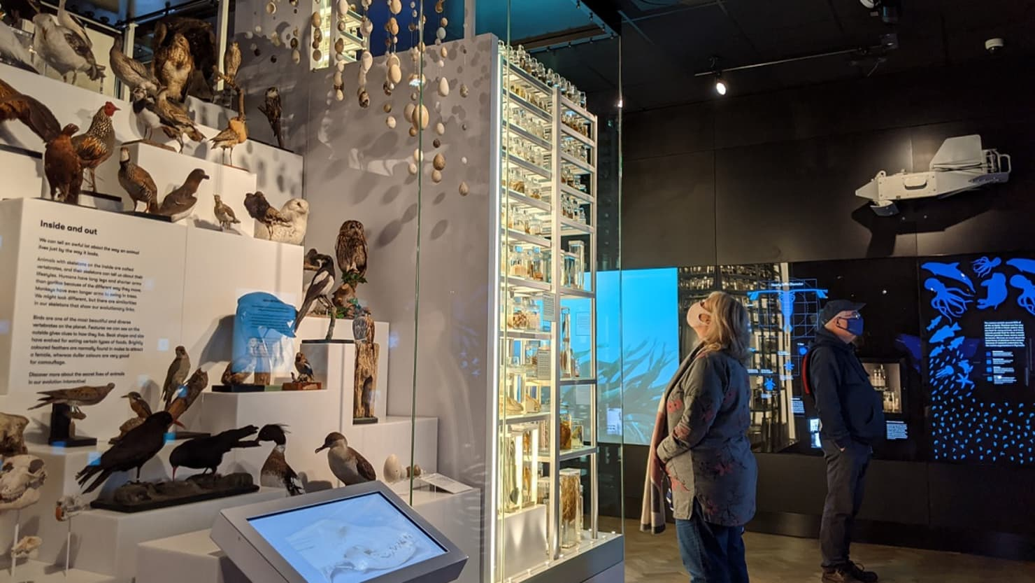 Two adults wearing face masks look at the displays in The Box's Mammoth gallery