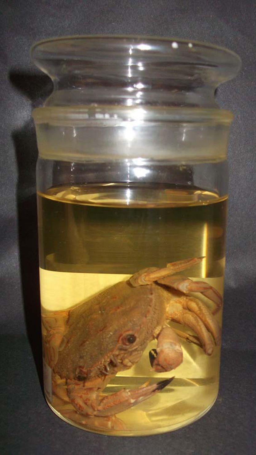 Photo of a marine specimen from The Box, Plymouth's natural history collections