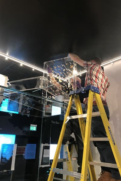 The installation of the insect display, someone carefully pins the insects while standing on a ladder