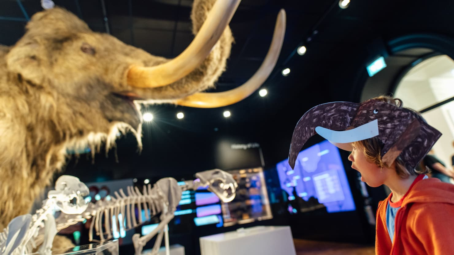 Boy looking in amazement at a woolly mammoth model