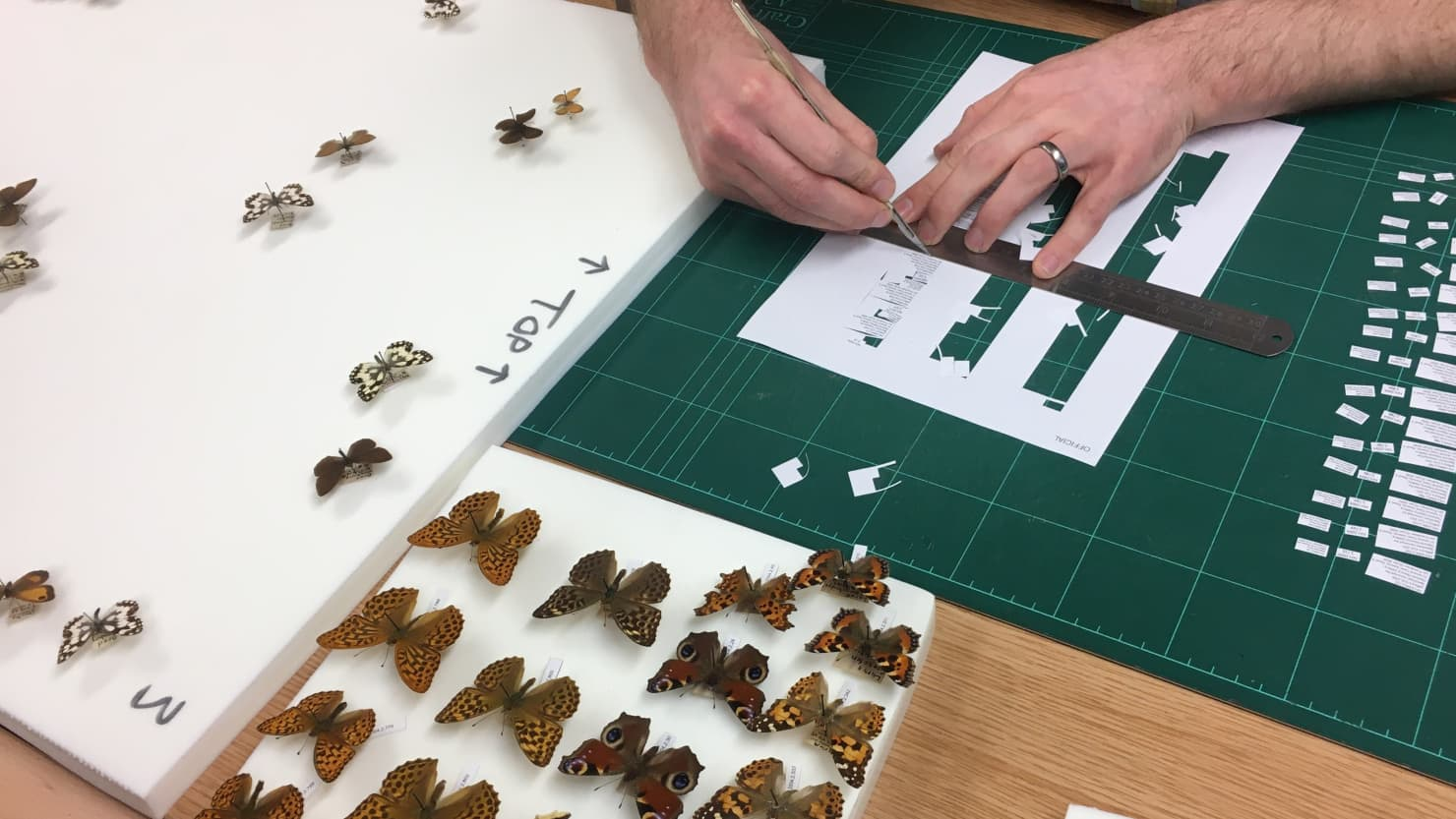Pinning butterflies and creating labels