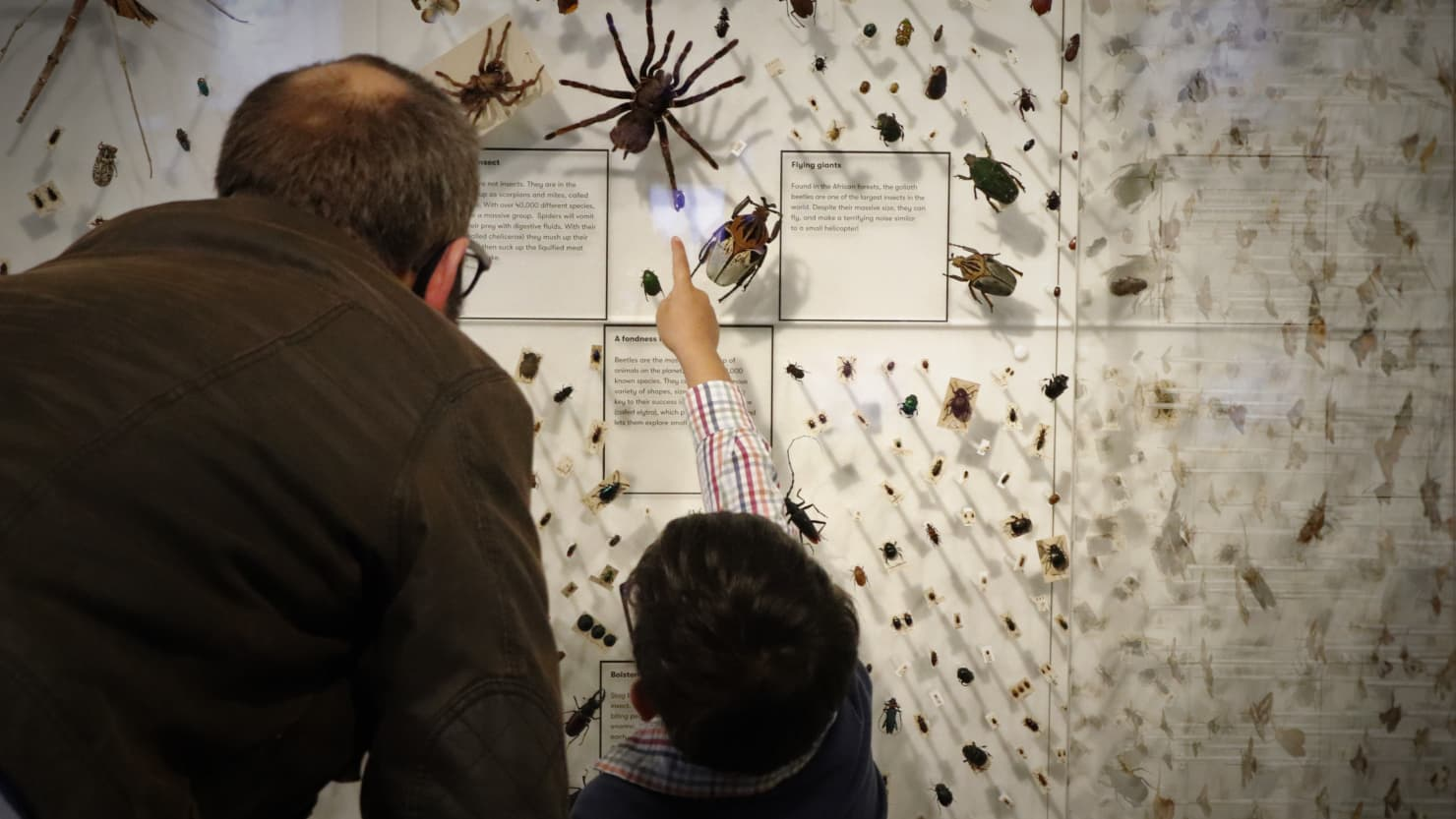 Displaying insects & biodiversity