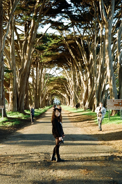 Feb 18, 2017 - Cypress Tree Tunnel: 6