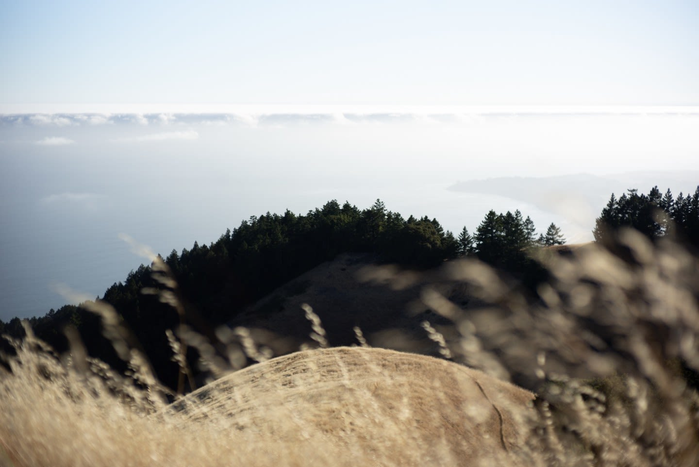 Jul 15, 2018 - Mount Tam + Stinson Beach: 6
