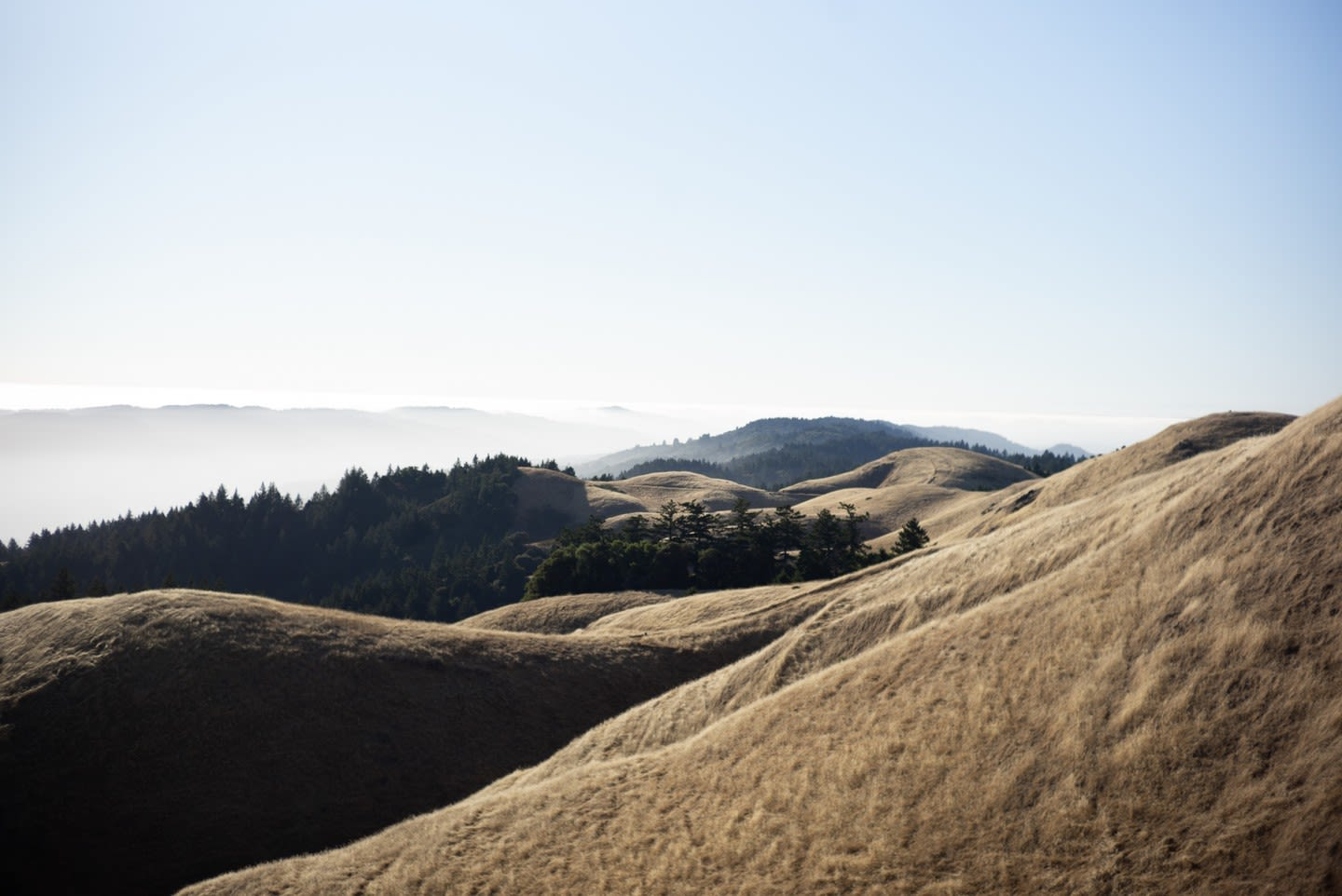 Jul 15, 2018 - Mount Tam + Stinson Beach: 9