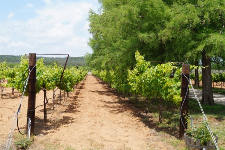 81. Fall Creek Vineyards, Tow, Texas
