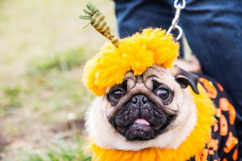 Pet Costumes