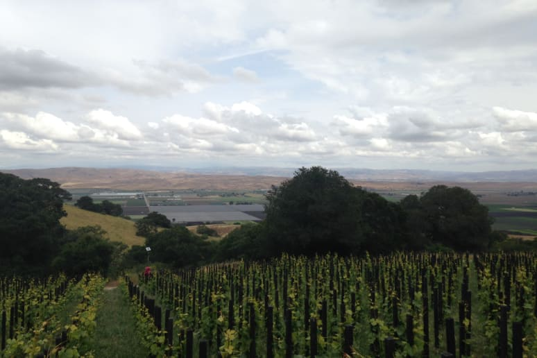 24. Bonny Doon Vineyard, Santa Cruz, Calif.