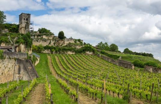 Vineyards of St-Émilion region in Bordeaux