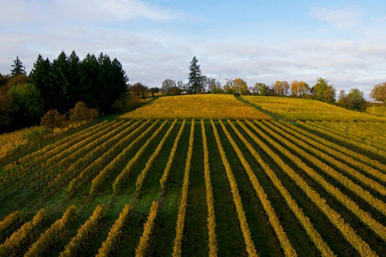 61. The Eyrie Vineyards, McMinnville, Ore.