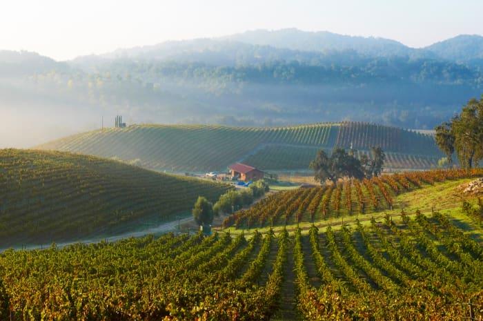 Best American Wineries