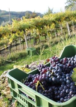 Verona Valpolicella Wine