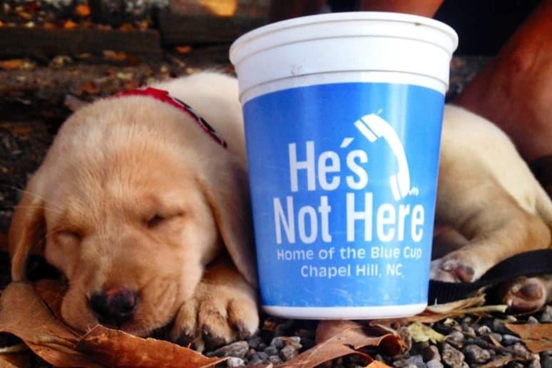 He's Not Here, University of North Carolina, Chapel Hill, N.C.
