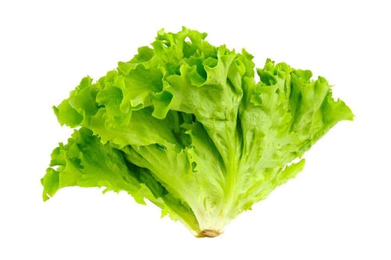 Trump's Favorite Vegetable: Lettuce?