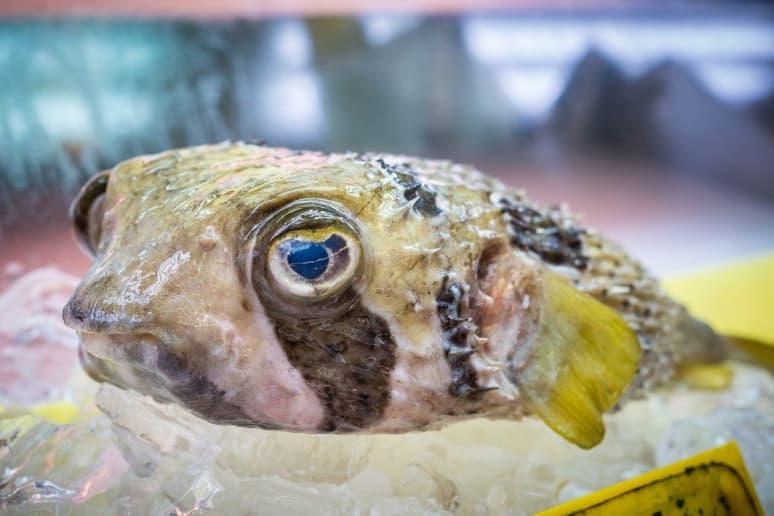 Pufferfish (Fugu)