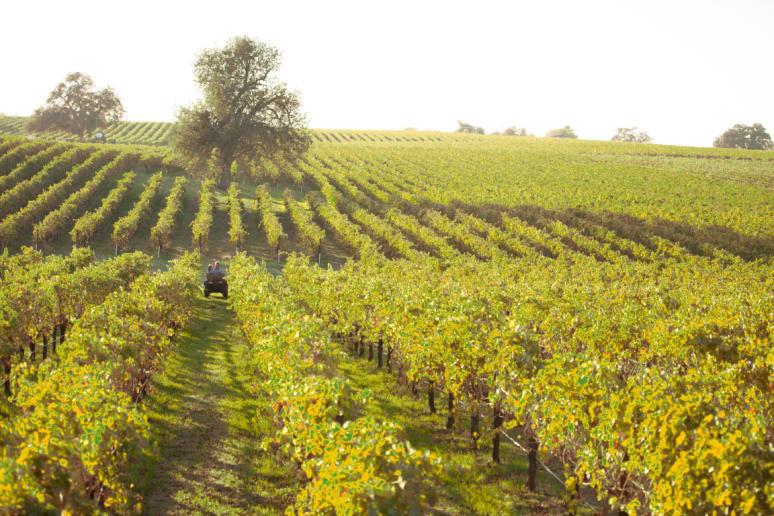 70. Bokisch Vineyards, Lodi, Calif.
