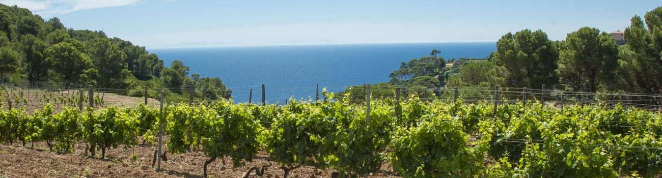Good Wine Made on an Italian Prison Island