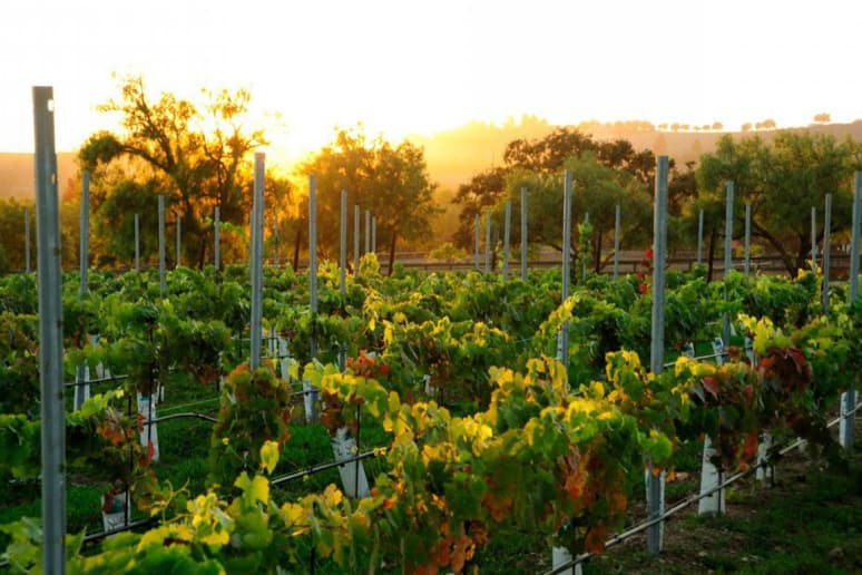 41. Tensley Wines, Los Olivos, Calif.