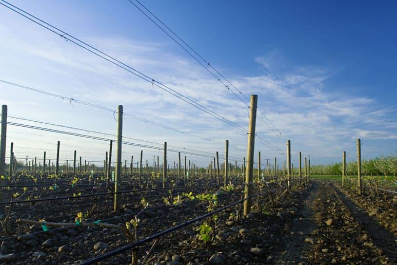 16. Cayuse Vineyards, Walla Walla, Wash.