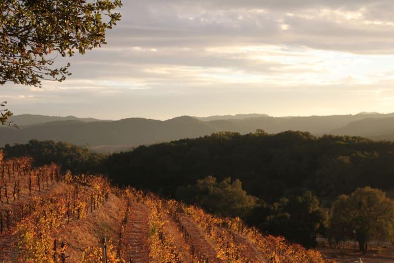 31. Saxum Vineyards, Paso Robles, Calif.