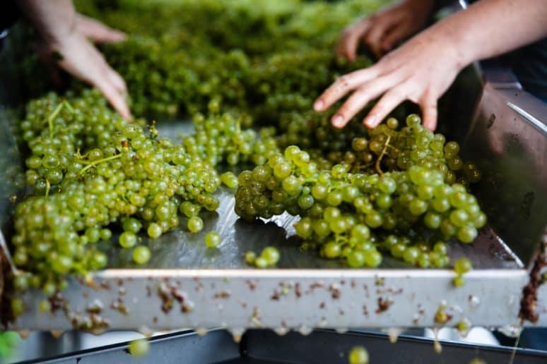 50. Hanzell Vineyards, Sonoma, Calif.