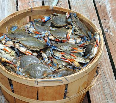 Blue crabs for Chicken Chesapeake