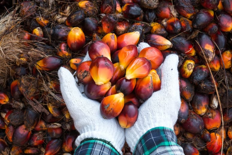 They're Phasing in Rainforest-Safe Palm Oil