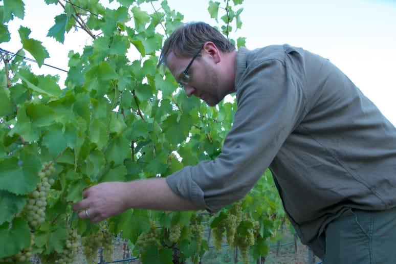 34. Massican Winery, Calistoga, Calif.