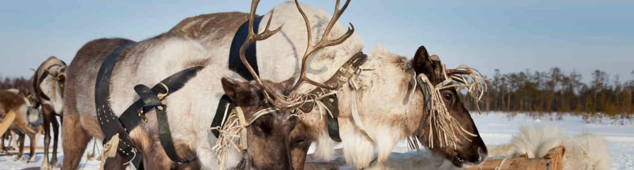 Santa's reindeer aren't just delivering toys this year.