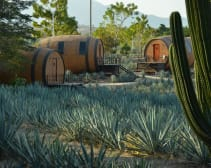 Tequila Barrel Hotel