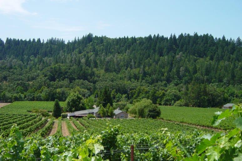 46. Neyers Vineyards, St. Helena, Calif.