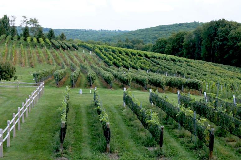 Sunset Meadow Vineyards, Goshen, Conn.