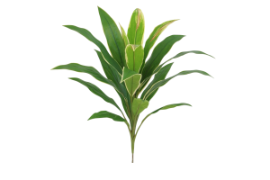 Photograph of Artificial Greenery – Cordyline Leaf Cluster – 45cmH