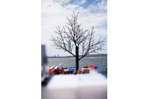 Photograph of LED Cherry Tree – 2.2mH x 3.5mW