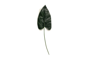 Photograph of Artificial Greenery – Cala Lily Leaf – 30cmL