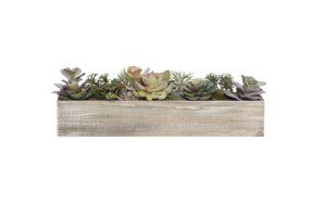 Photograph of Artificial Greenery – Succulents in Timber Tray – 45cmL